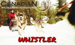 Whistler-Dog-Sledding-Canadian-Wilderness-Adventures