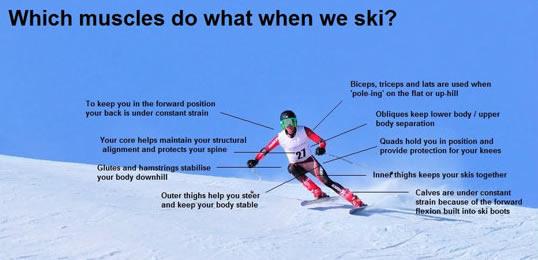 Ski Muscles