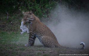 Leopard White Masai