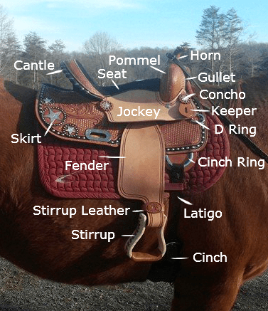 parts_of_western_saddle.jpg
