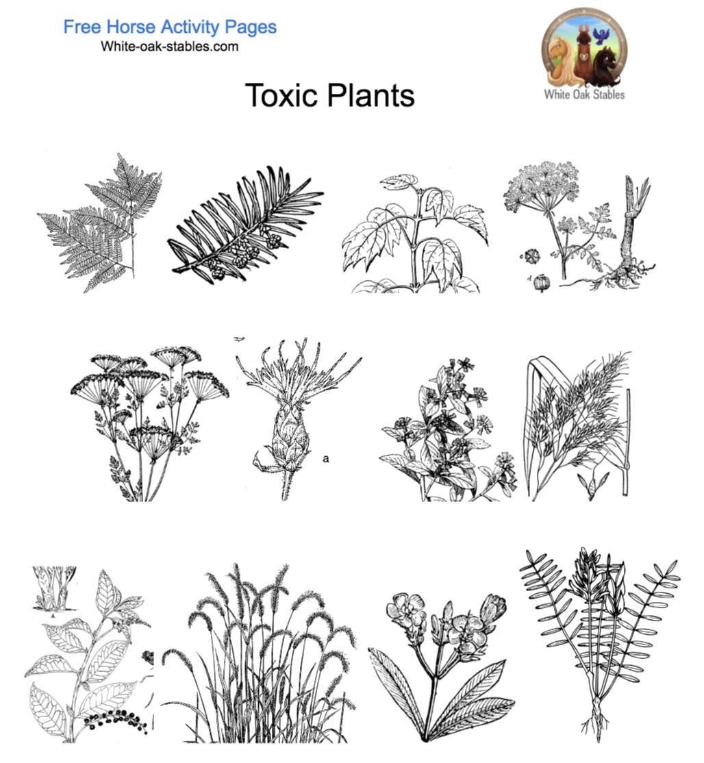 poisonous plants 12 activity pages white oak stables rh white oak stables com