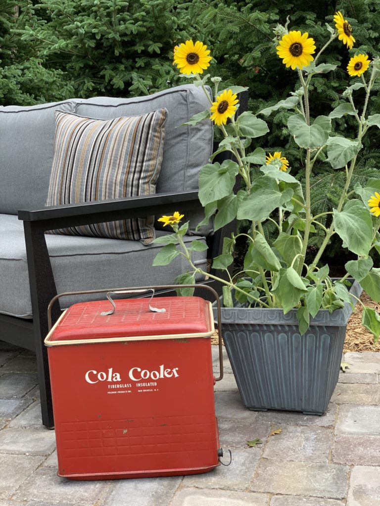 Vintage red cooler and sunflowers