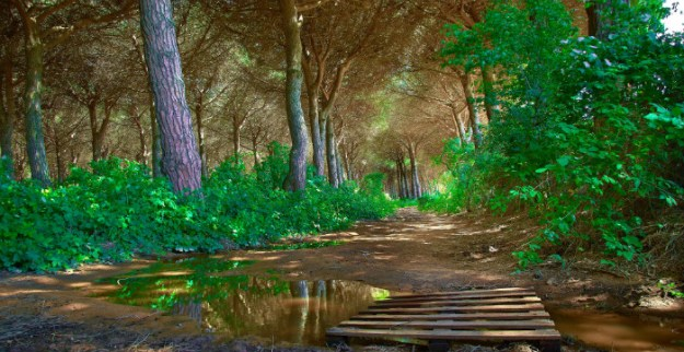 gorgeous-hiking-path-for-site