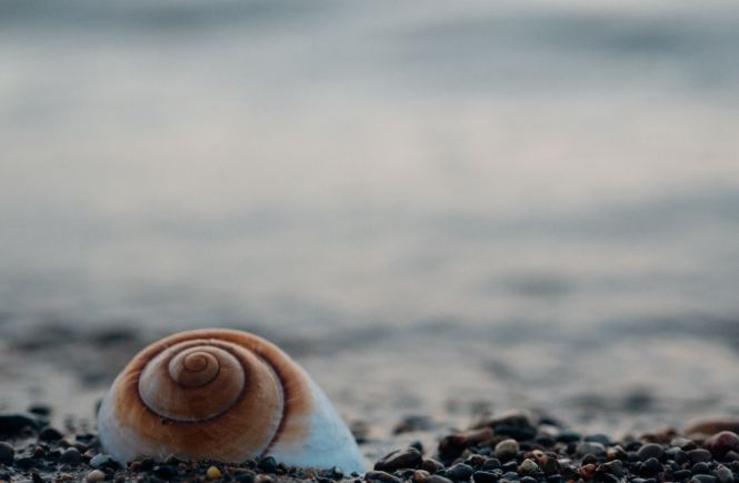 macro photography tips sea shell