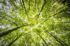 greenspaceblog