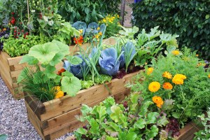 Colorful-vegetable-garden