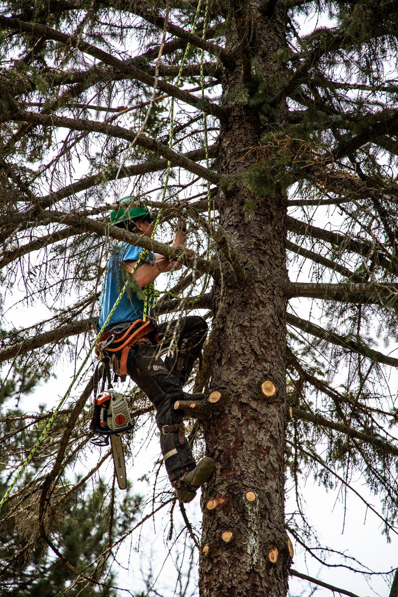 White Falcon Arborist Climbing