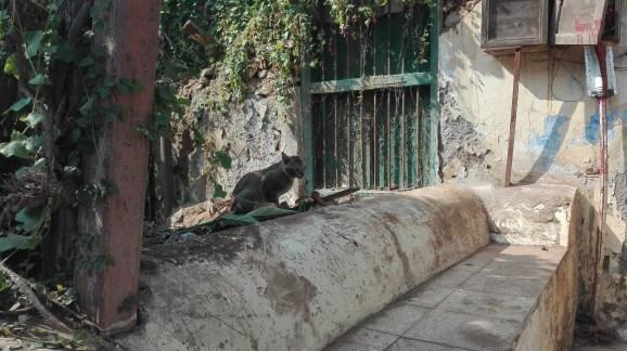 Token Cat Pic1