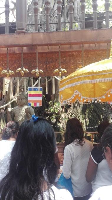 Gangaramaya Temple - Bodhi tree