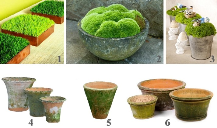 Moss ideas & sources