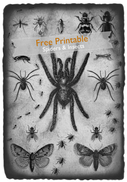 Spiders and Insects ~  Free Printable