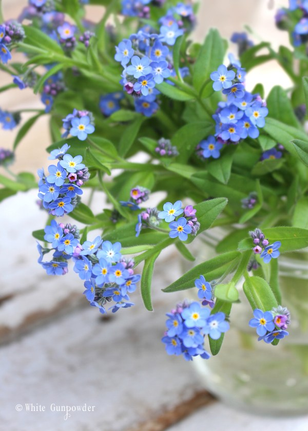Spring blossoms-flowers, forget me nots