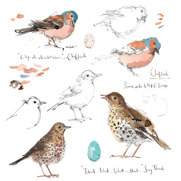 Sketchbook Chaffinch and Song Thrush - Madeleine Floyd - Limited Edition