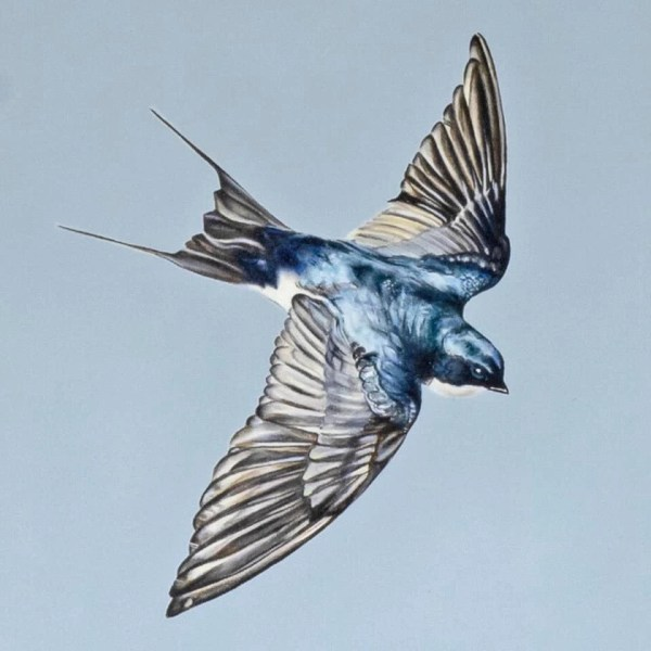 Swallows - Natalie Toplass - Limited Edition
