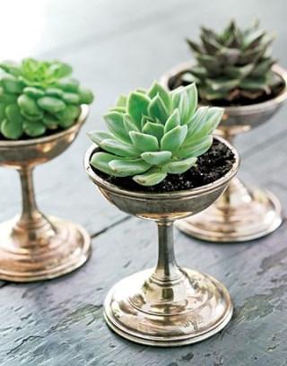 Succulents. Vintage Silver.