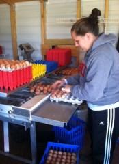 Amber sorting eggs