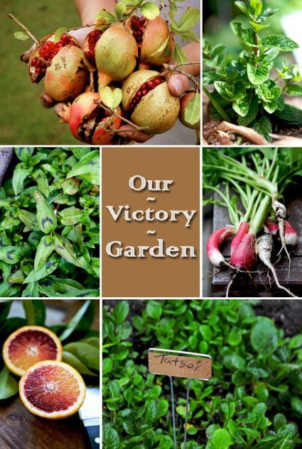 victory-garden-photos