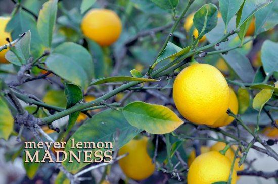 meyer-lemon-vinaigrette-dressing