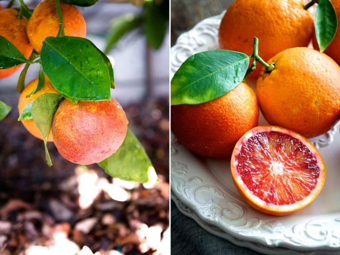 Refreshing Blood Orange Margarita Cocktail Recipe  @whiteonrice