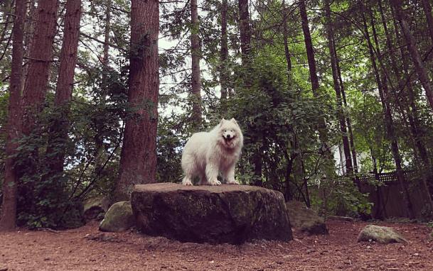 Tin Tin in Dogwood Park