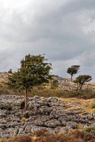 Trees and limestone