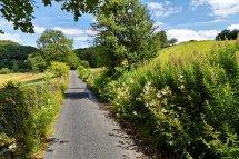 Bog Lane
