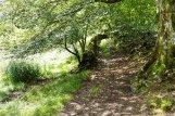 Path near Holmeshead Farm