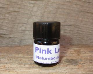 Pink Lotus Absolute