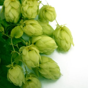 hops co2 extract essential oils