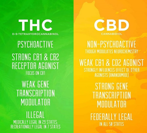 Difference between THC and CBD Hemp Oil