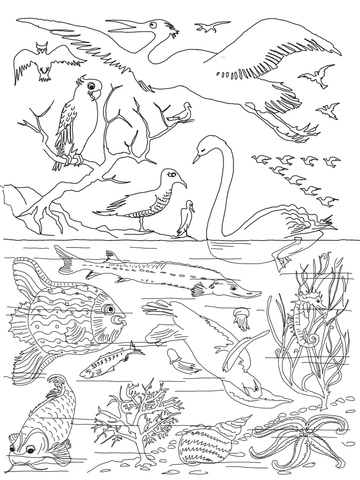 5th day of creation coloring page free printable coloring
