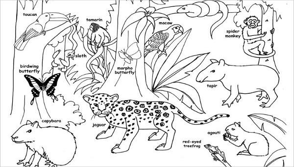 8 jungle coloring pages pdf png free premium templates