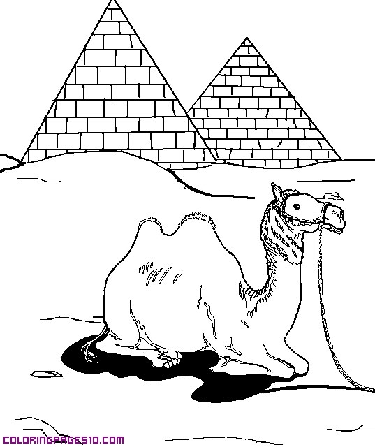 a camel and pyramids coloring pages