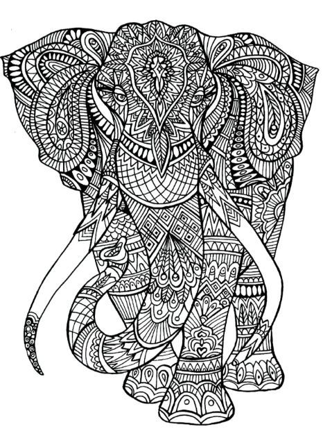 adult coloring pages elephant animal patterns elephant