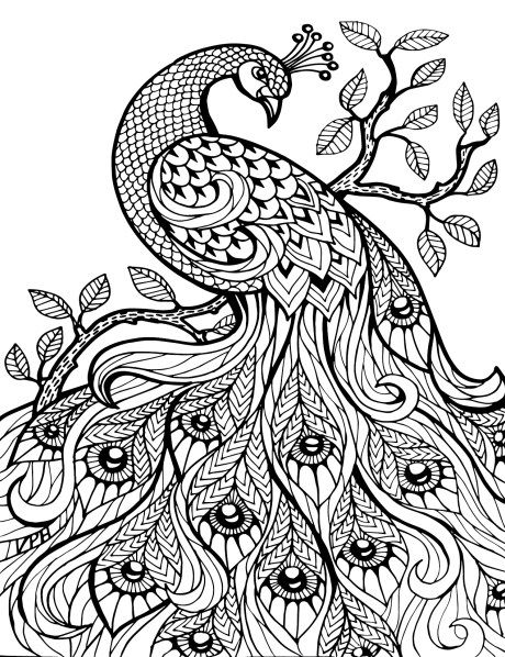 adult coloring pages peacock 2 peacock coloring pages