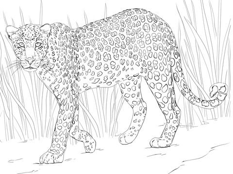 african leopard coloring page afrikanische tiere