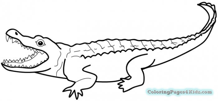 alligator coloring pages for preschool free printable