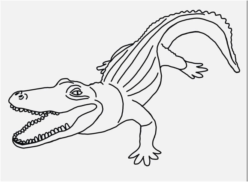 alligator coloring sheet collection cartoon crocodile