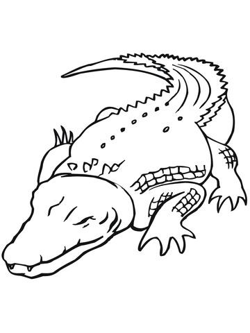 australian saltwater crocodile coloring page free