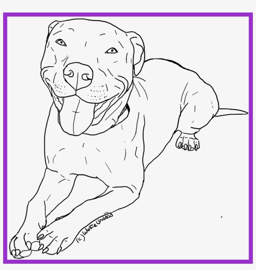 awesome american pitbull terrier coloring pages womanmate