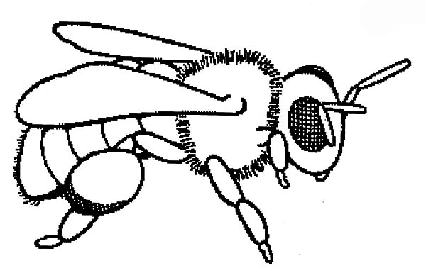 ba honey bee coloring pages coloring sky