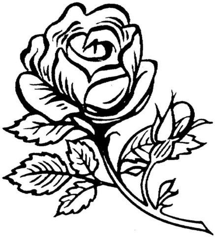 beautiful big rose coloring page free printable coloring pages