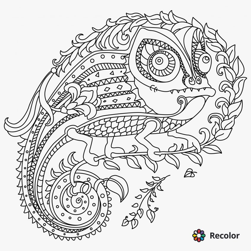 best coloring homey inspiration chameleon pages patterns