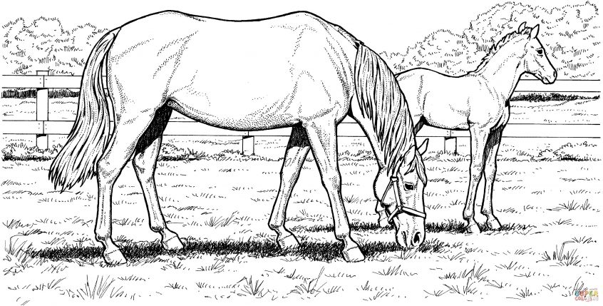 best coloring horse pages to printstic of horses free