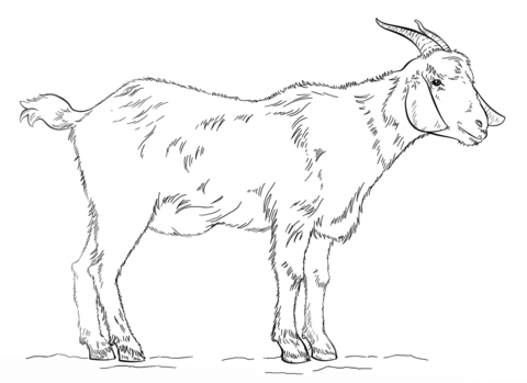 billy goat coloring page free printable coloring pages