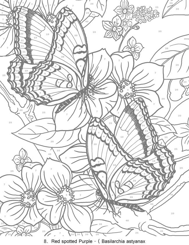 butterfly coloring pages for adults at getdrawings