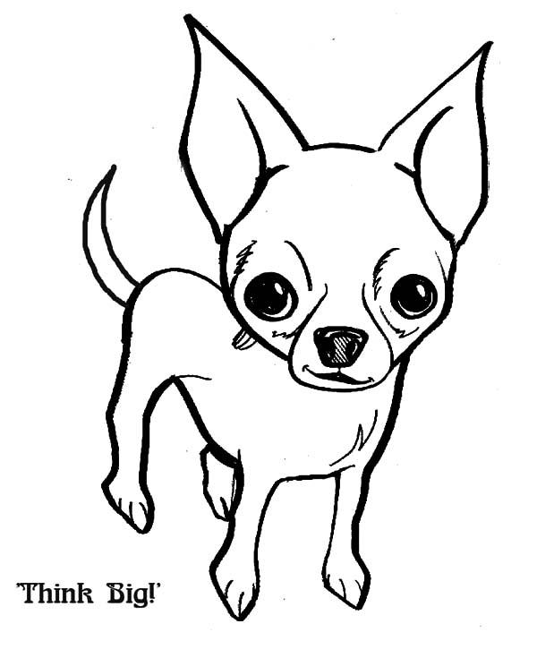 chihuahua dog think big coloring pages netart