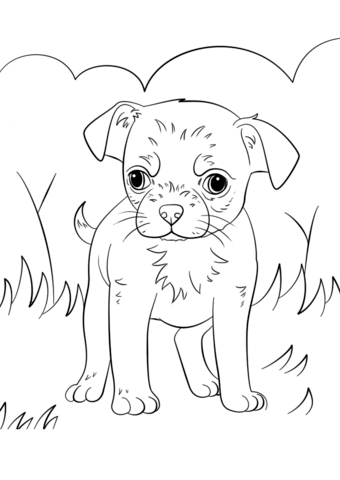 chihuahua puppy coloring page free printable coloring pages