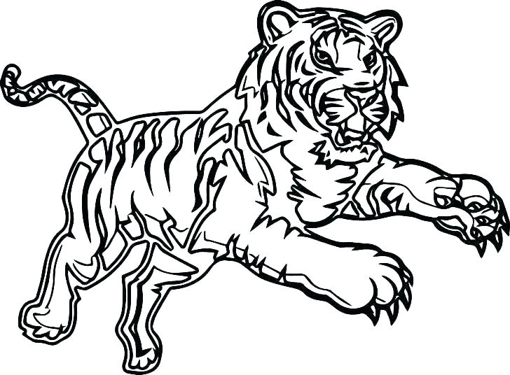 coloring page tiger ba pages tigers ainoumiclub