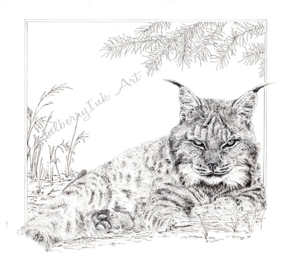 coloring pages cats digital coloring pages coloring page birthday gift coloring page adult coloring book coloring pages for kids